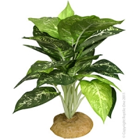 Plant Reptile Evergreen With Rock Base (M)
