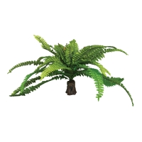 Plant Reptile Realistic Fern on Rock Base (M)
