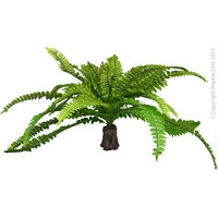 Plant Reptile Realistic Fern on Rock Base (XL)