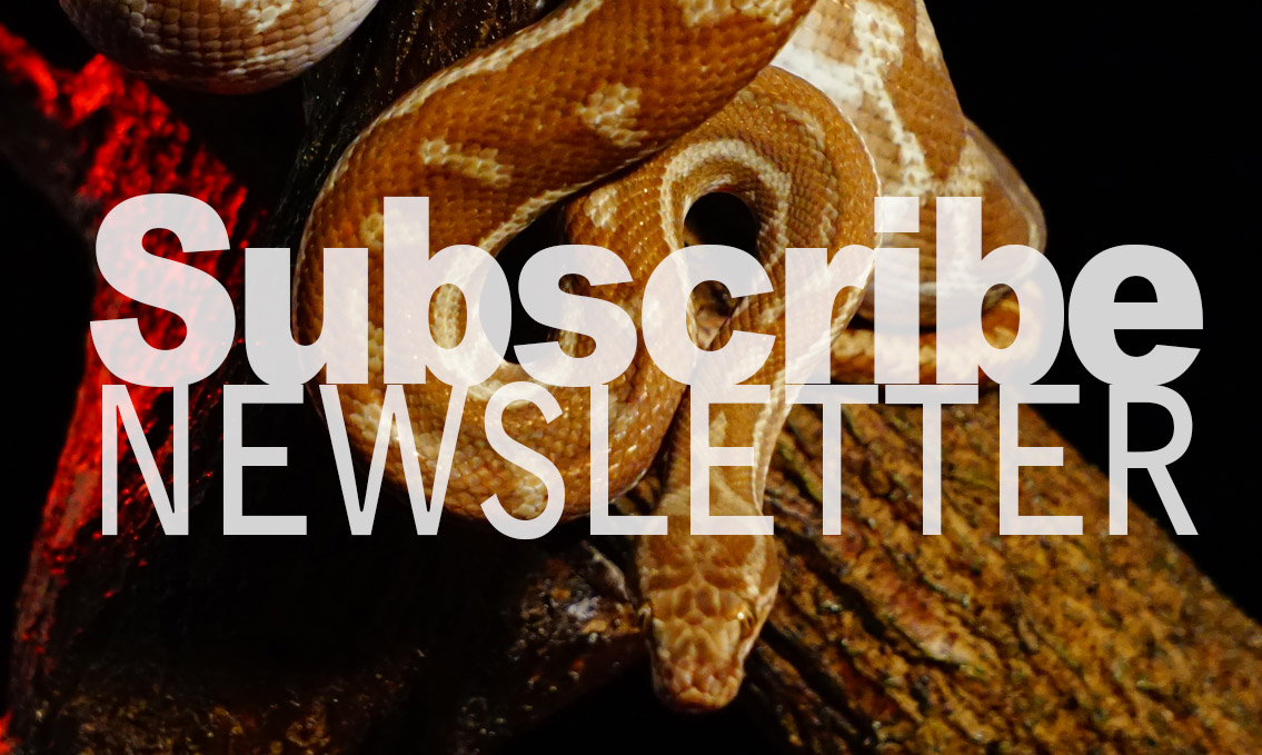 Subscribe Reptile One Newsletter