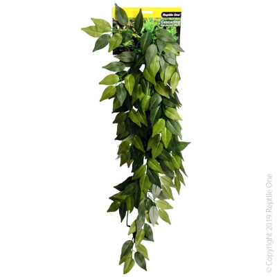 Green Variegated Ivy Cascading Plant