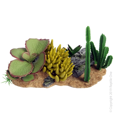 Succulent Garden with Resin Base