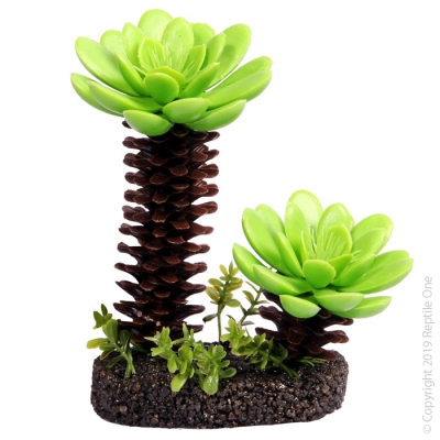 Medium Succulent Tree with Sand Base